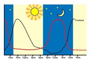Illustration of the healthy relationship between Cortisol and Melatonin
