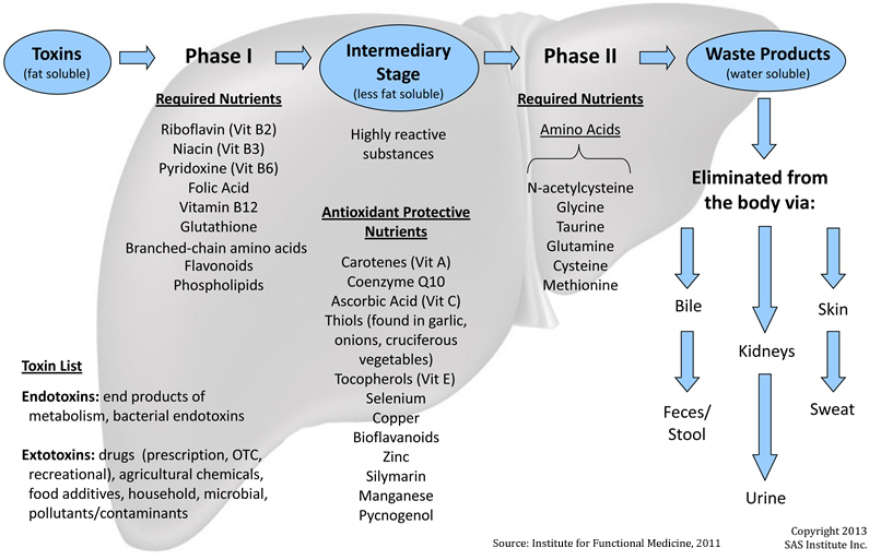 A simplified representation of nutrients needed for phase 1 and 2 liver detox
